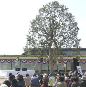 シンボルツリーのこの見事な姿。そのすぐ側で歌わせていただきました。