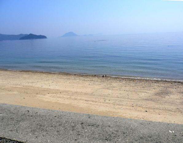 のどかな海の風景。海辺でかもめたちが・・・